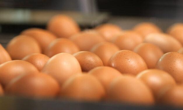 Les ovoproduits bio, un marché en développement, concomitant avec la demande en œuf coquille bio !