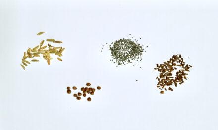 Edou Breizh se développe sur les épices bio produites en France