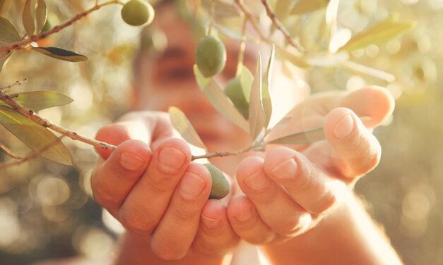 L'extrait de feuilles d'olivier d'IFF est disponible en qualité biologique