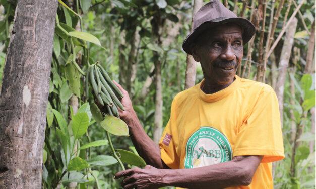 Passion & responsabilisation, PROVA accélère son développement sur les solutions aromatiques biologiques et durables