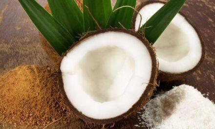 HERZA Schokolade lance une nouvelle gamme d'inclusions bio avec du sucre de fleur de coco
