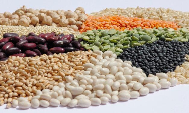 Les protéines végétales bio, des filières d'enjeu pour l'agriculture et l'alimentation de demain