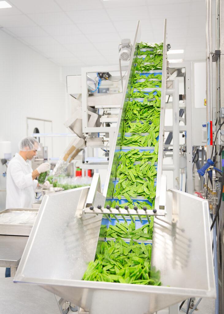 Chaine de conditionnement des légumes - ©Adrianor