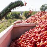 Légumes du soleil bio français : la filière se structure pour la transformation