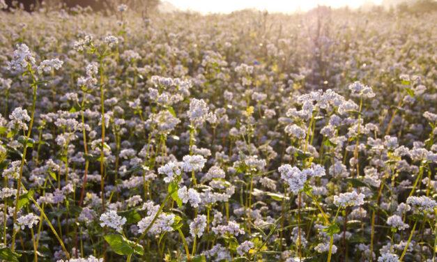 Pesticides : les contaminations subies génèrent des pertes énormes pour les producteurs bio