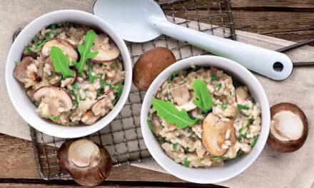 Un champignon de souche Bio pour rehausser le goût