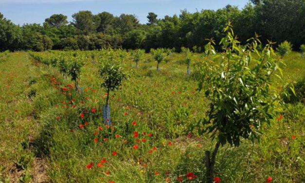 Amandera lève 1M€ auprès de partenaires financiers engagés pour développer ses filières amandes et noisettes bio françaises