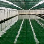 Spiruline Française : la recherche pour se conformer au règlement bio