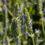 Worlée et grain. misent sur la graine de chia bio, française et équitable